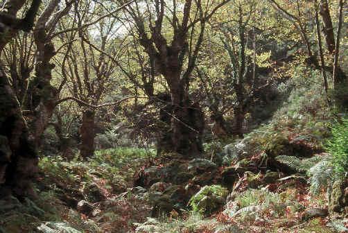 Broadleaf Woodland